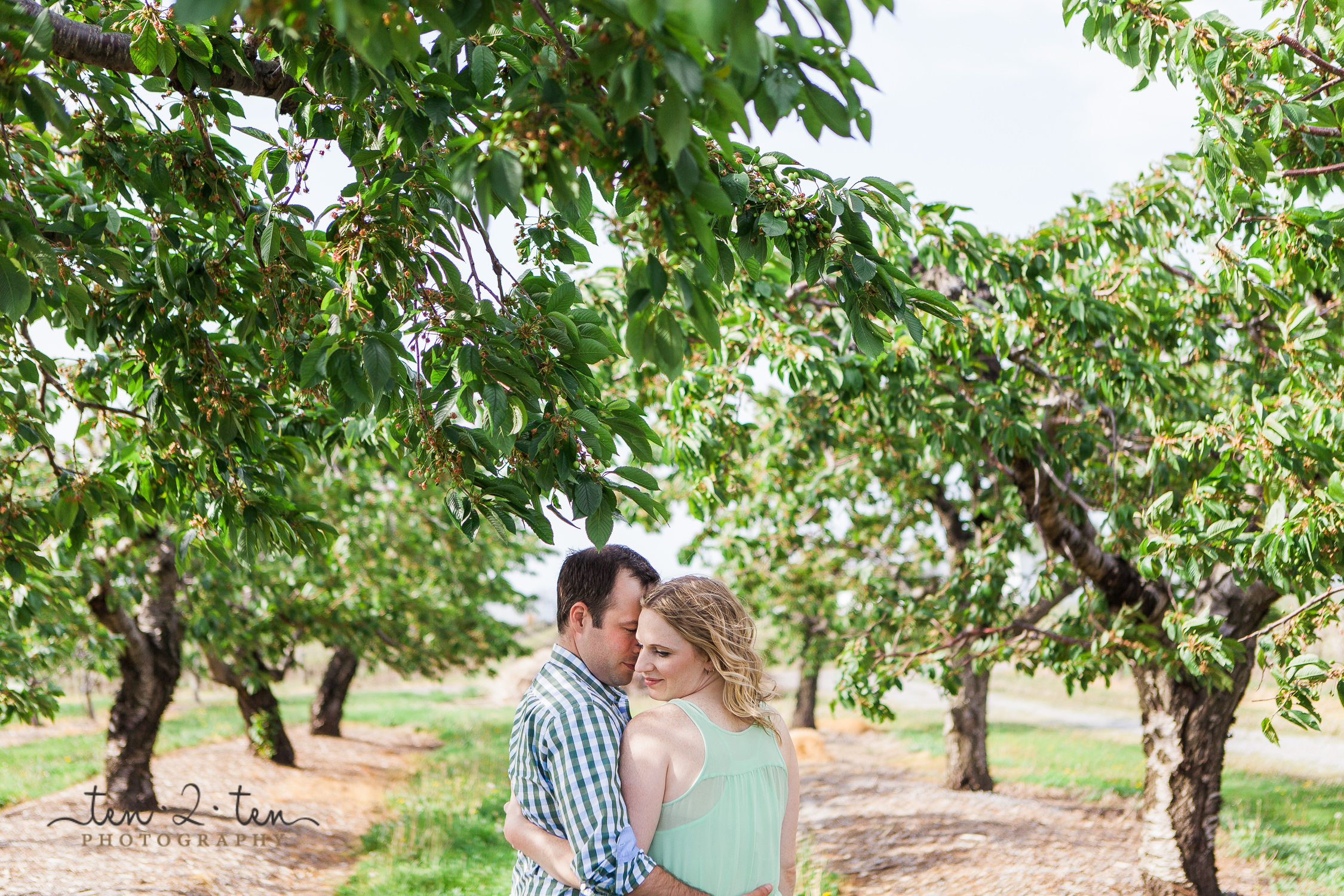pillitteri estates engagement photos, pillitteri estates winery engagement photos, niagara winery engagement, ontario vineyard engagement photos, vineyard engagement photos