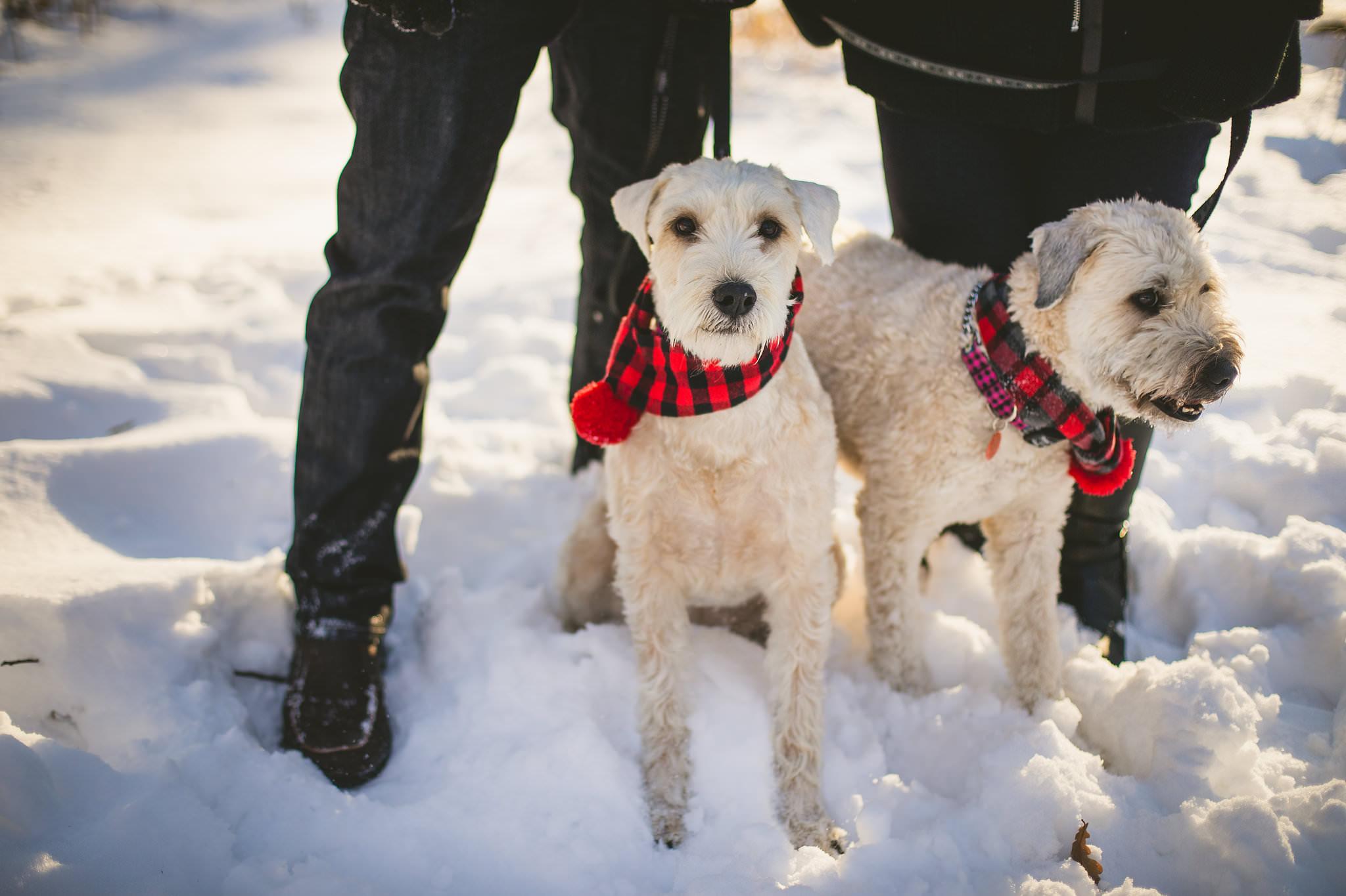 unionville winter engagement photos, unionville engagement photos, engagement photos with dogs, engagement photo ideas with dogs