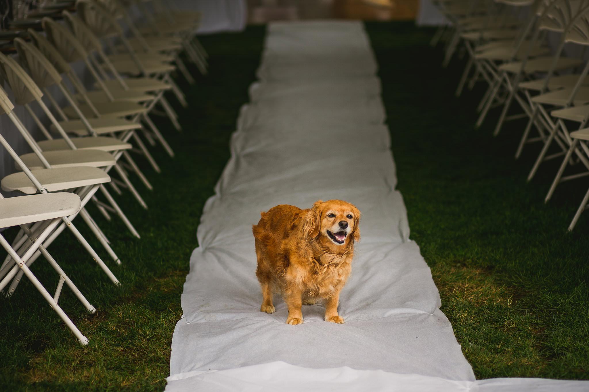 Kristen Adam Kindred Loft Whitby Wedding Photos 94 - Durham Wedding Photographer: Kindred Loft Wedding Photos